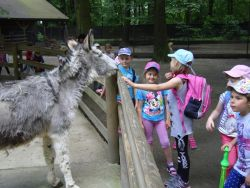 Czytaj więcej: Wycieczka do ogrodu zoologicznego