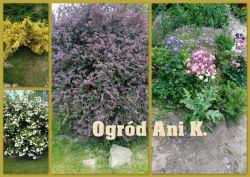 Czytaj więcej: Wiosna w ogrodzie